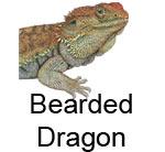 beardeddragonsheet.jpg