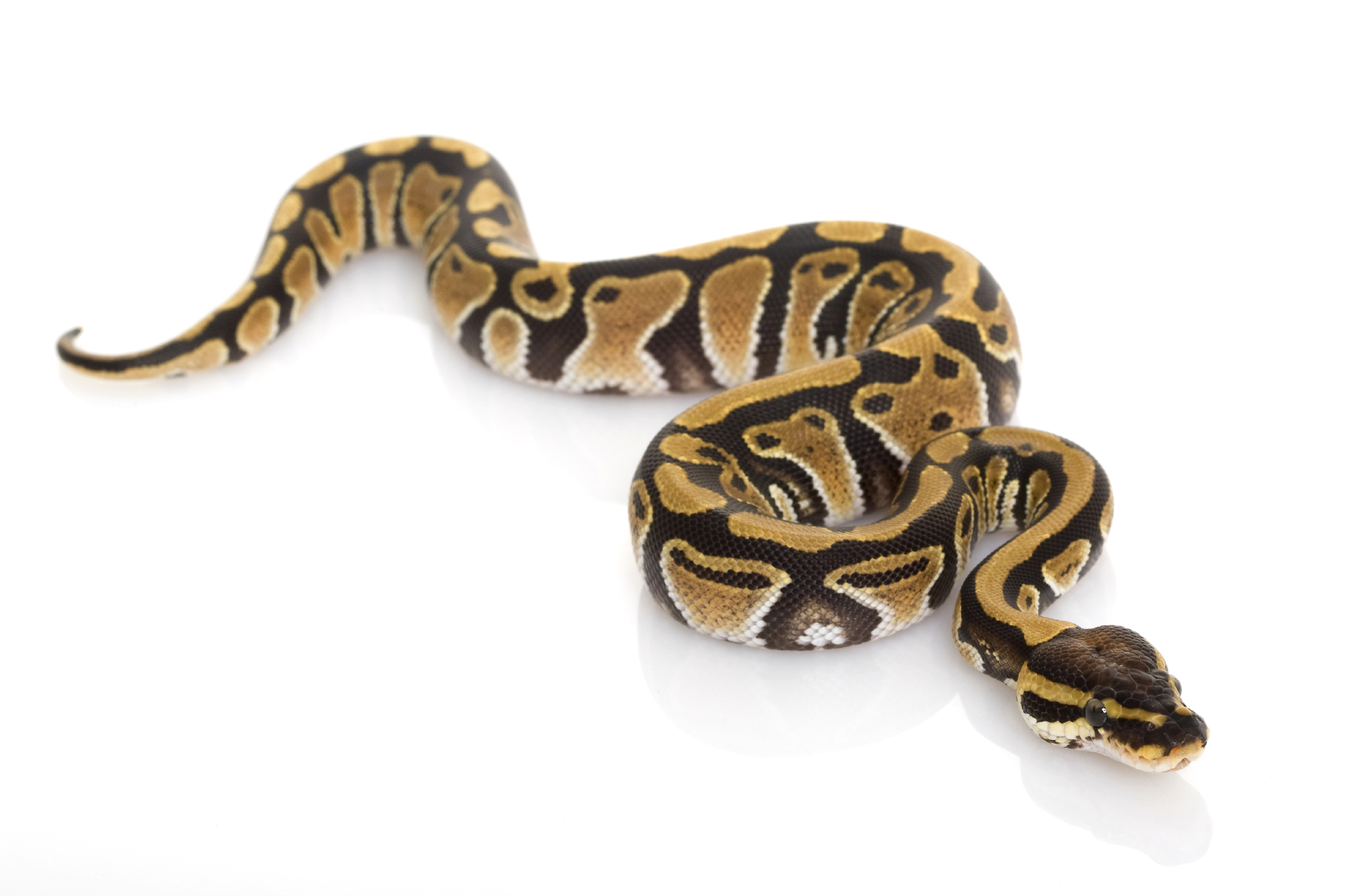snake-big.jpg