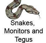 snaketegumonitor.jpg