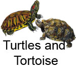 turtletortoise.jpg